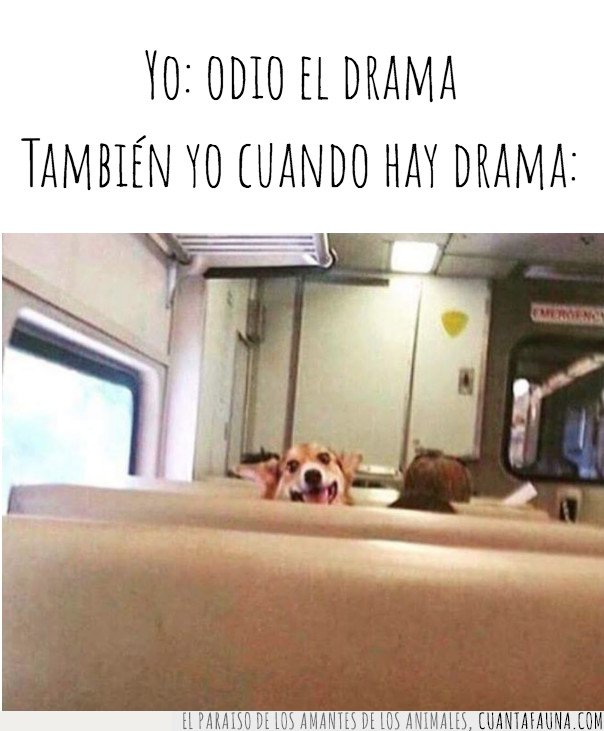 drama,perro