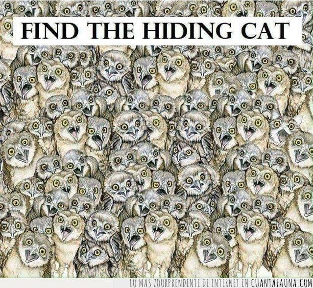 buho,gato