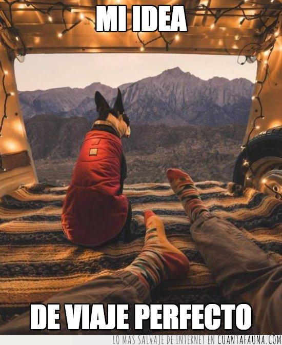 gato,perro,viajar,wanderlust