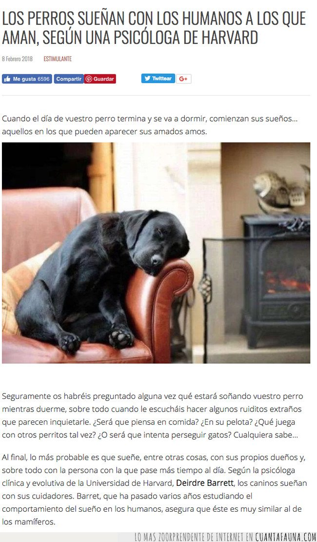 perros,sueños