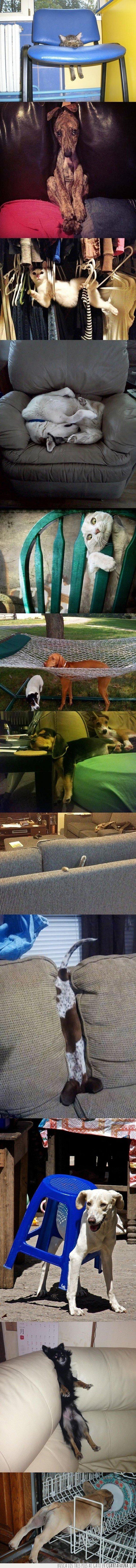 animales,fails,gatos,muebles,perros