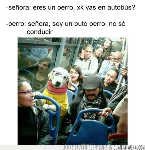 autobús,conducir,perro