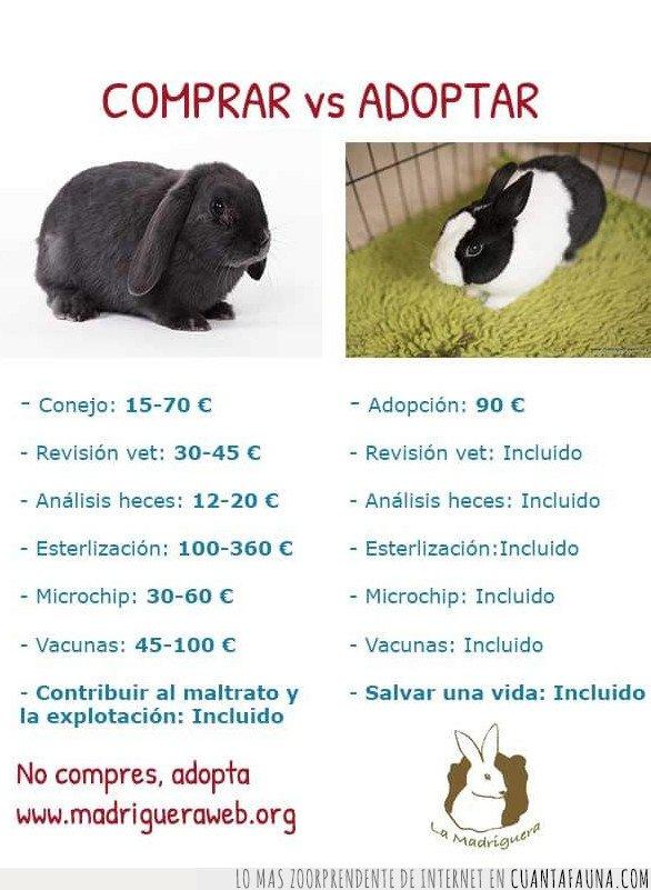 adopta,conejo