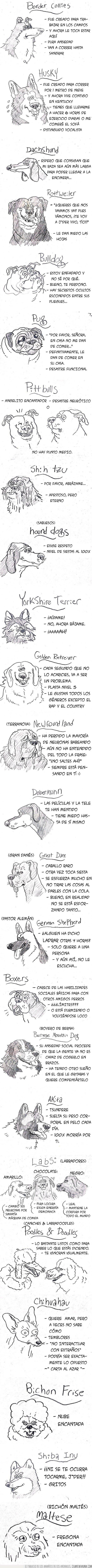 perros,razas