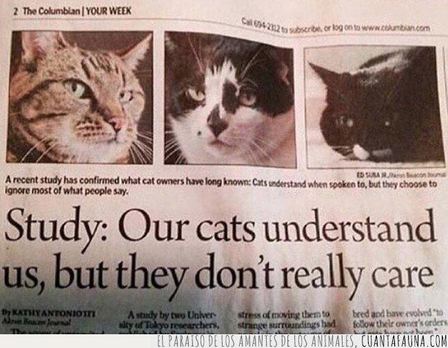 entienden,estudio,gato