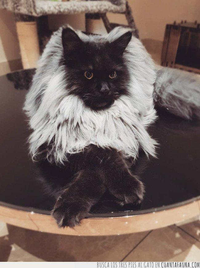 esperando,gato