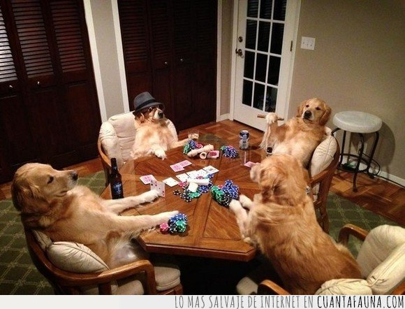 jugando,perros,poker