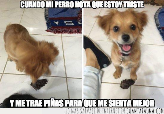 animar,perros,triste