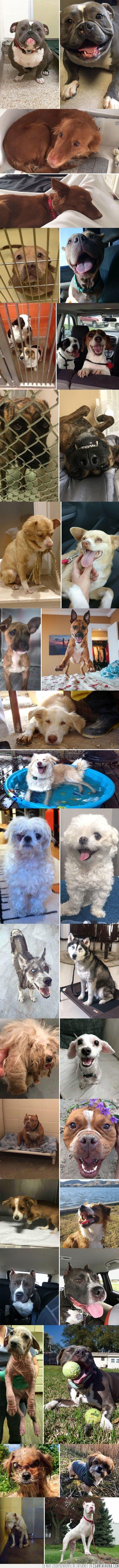adoptados,antes,después,perros