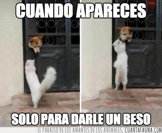 AMOR,BESO,ENAMORADO,PERROS