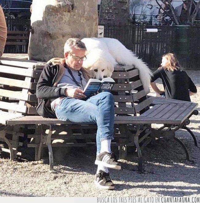 leer,perro