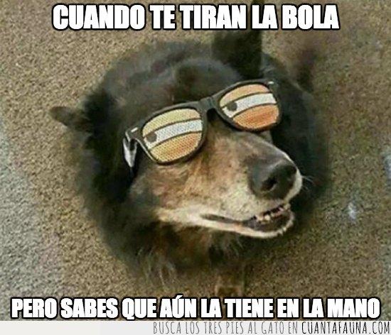 engaño,meme,perro