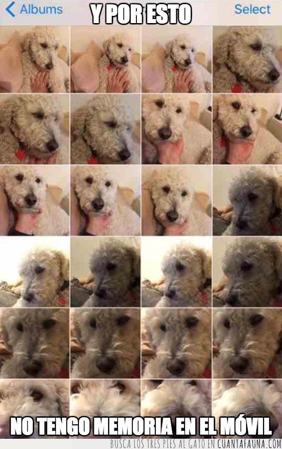 memoria,perro
