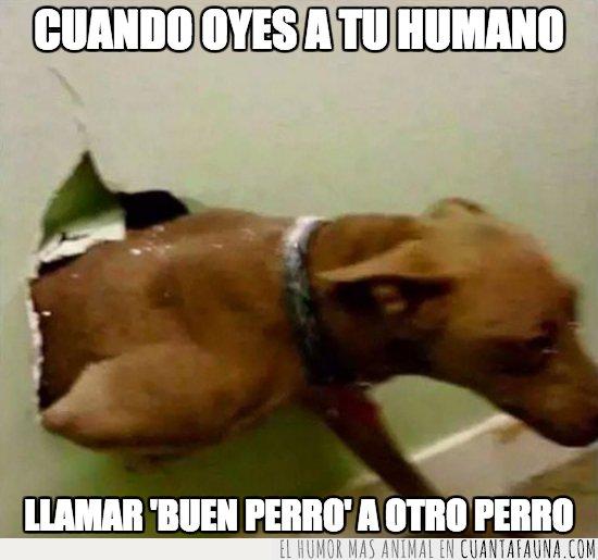 good boy,perro