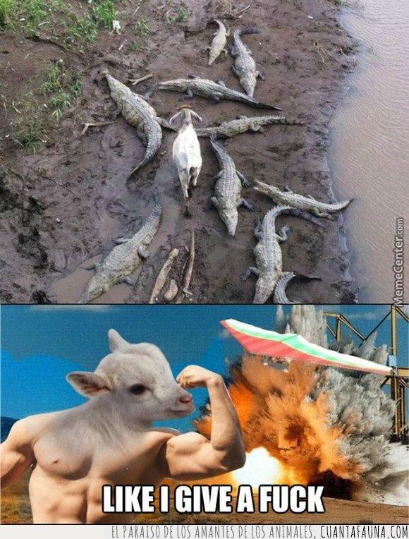 cabra,cocodrilos