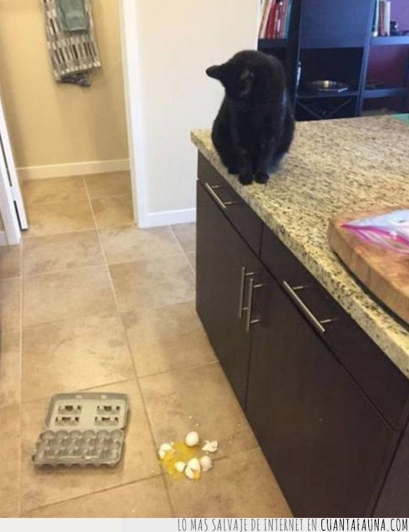 gato,huevo