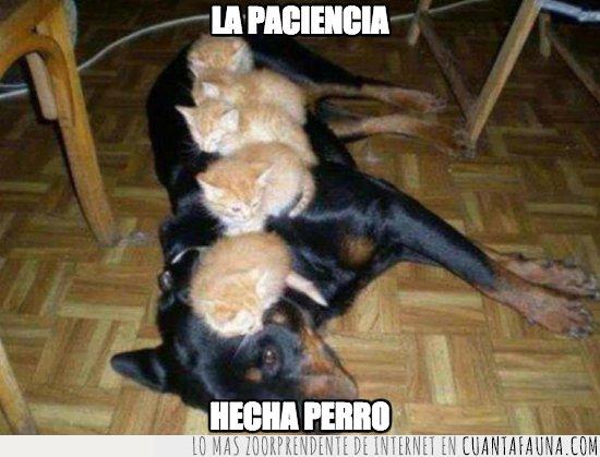 cachorros,gato,perro