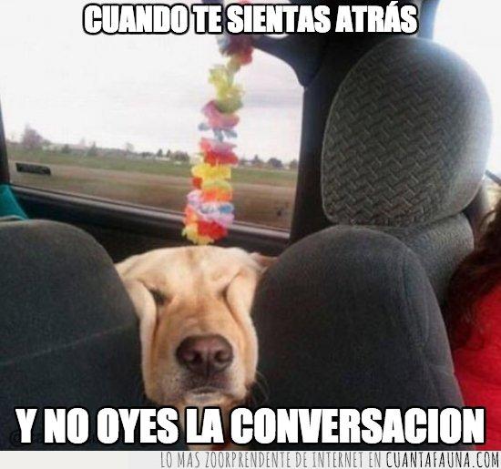 coche,perro