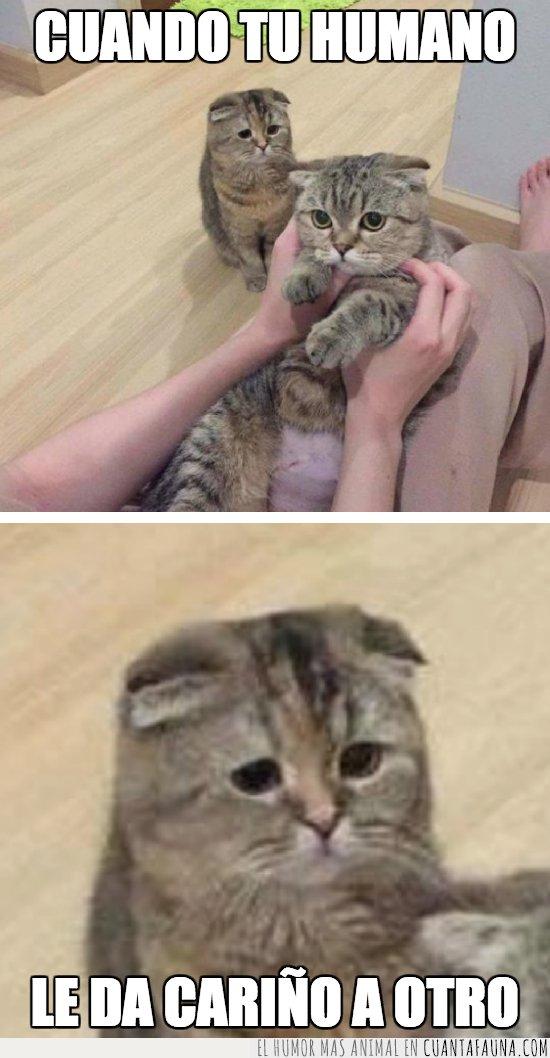 gato,triste