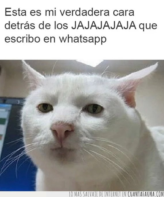 chat,gato,hahaha