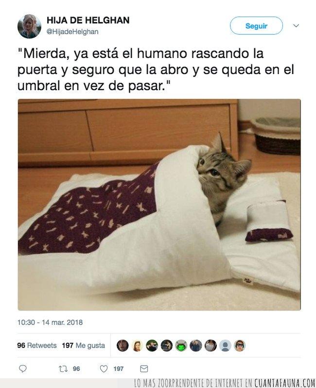 gatos,tuiter