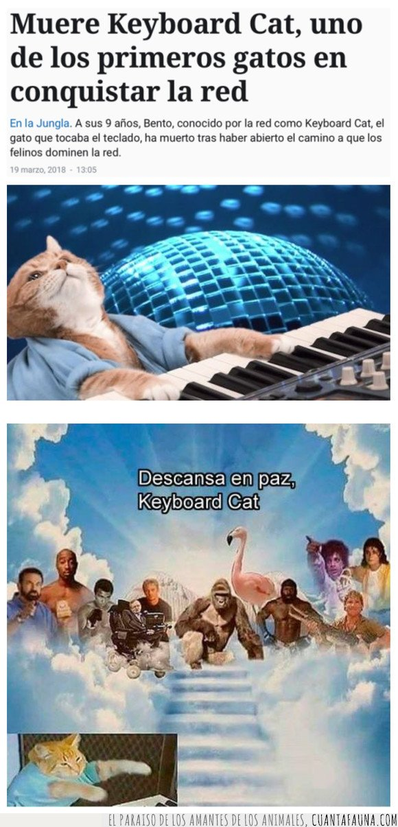 gato,keyboard cat,muerte