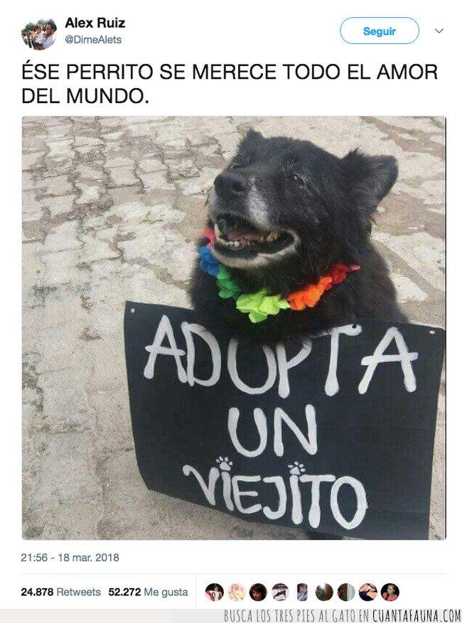 adopta,perro