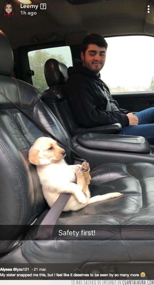 cachorro,coche,perro