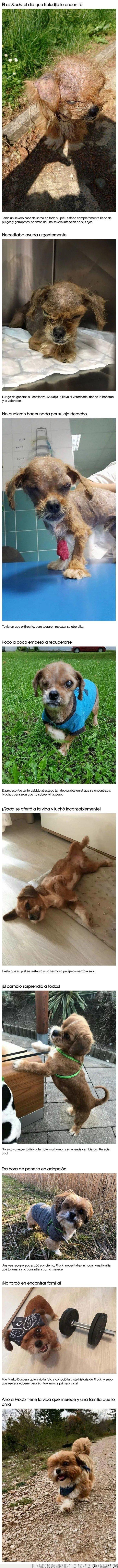 antes,después,perro,rescatado,transformación