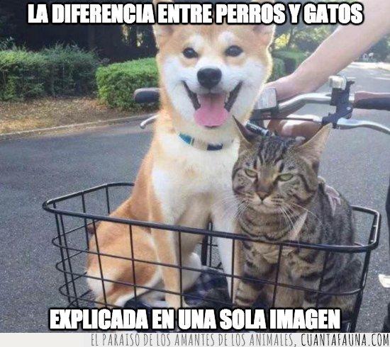 gato,perro