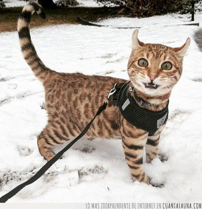 gato,nieve,paseo