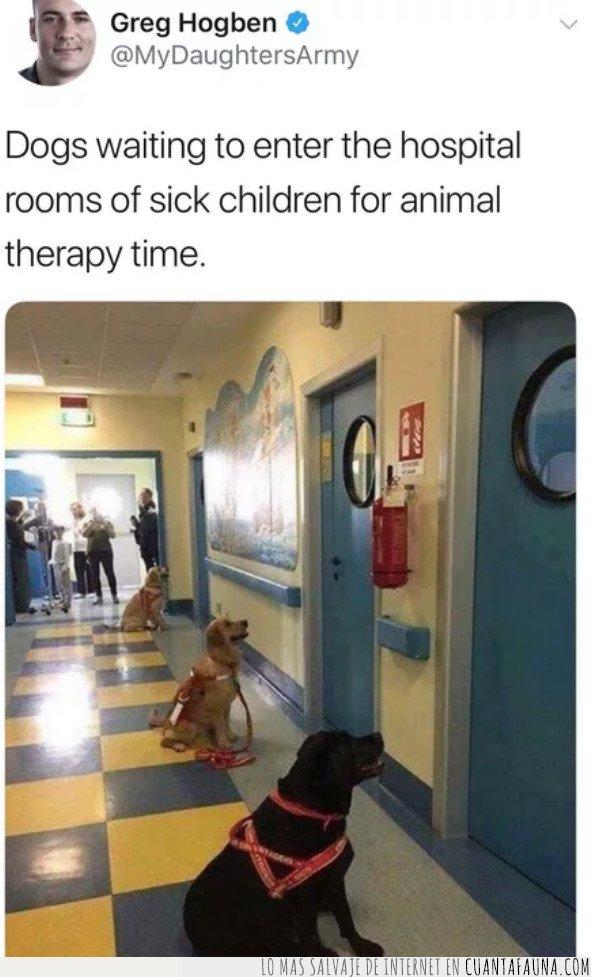 hospital,niños,perro,terapia