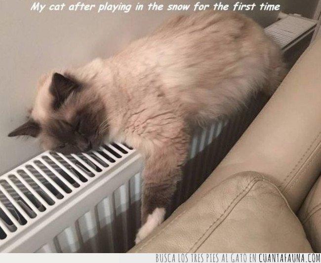caliente,gato,nieve
