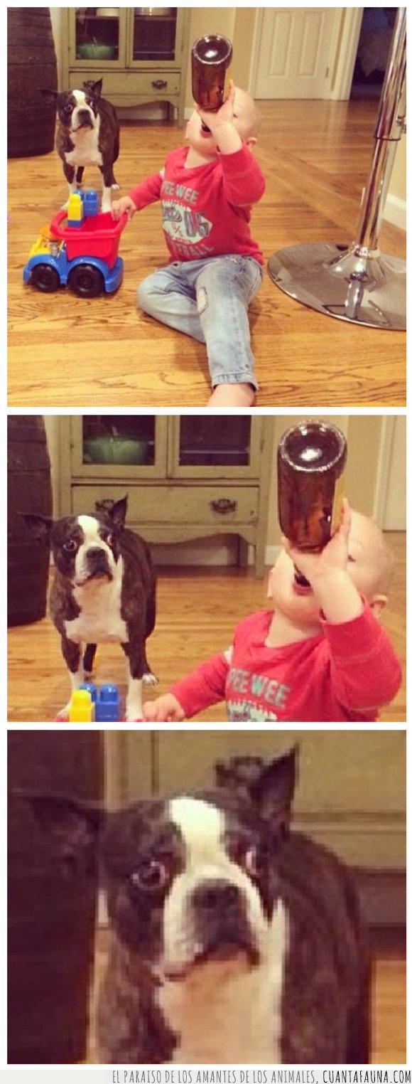cerveza,mirando,niño,perro
