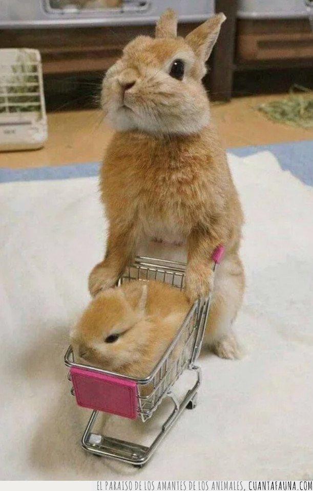 bebé,conejo