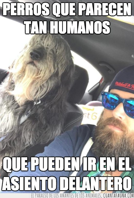 hipster,perro
