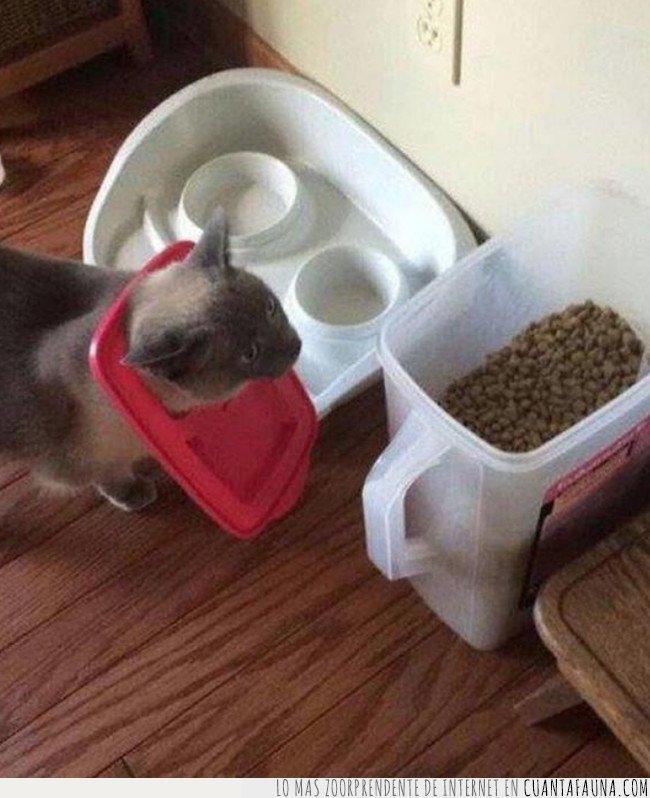 gato,robo