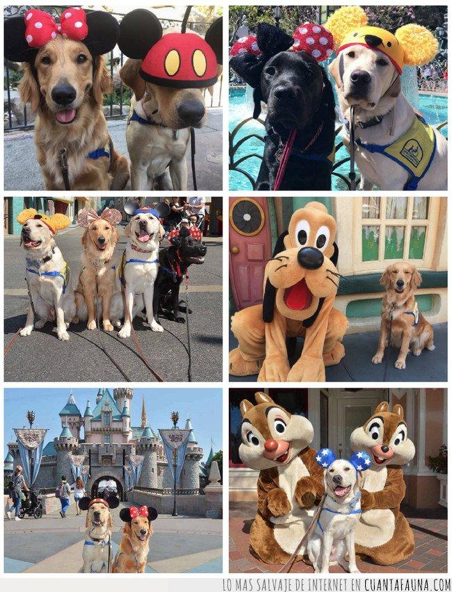 disney,perros,perros de servicio,perros de terapia