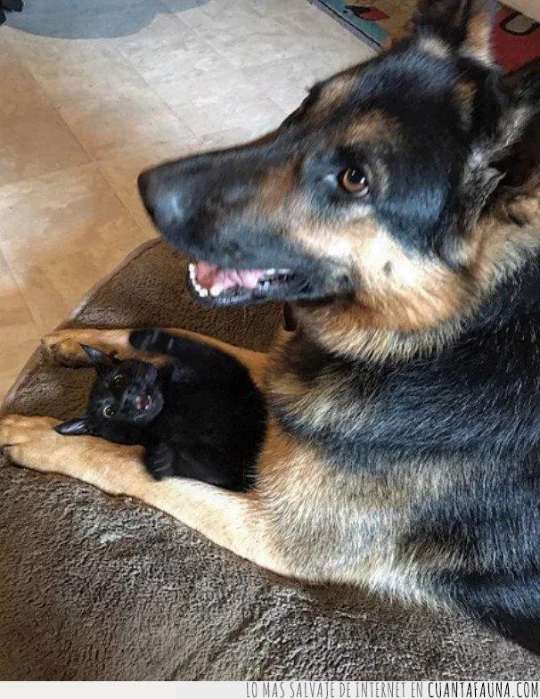 adoptar,cachorro,gato,pastor,perro