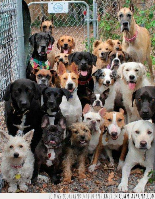 foto,guarderia,perro