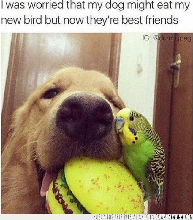 periquito,perro