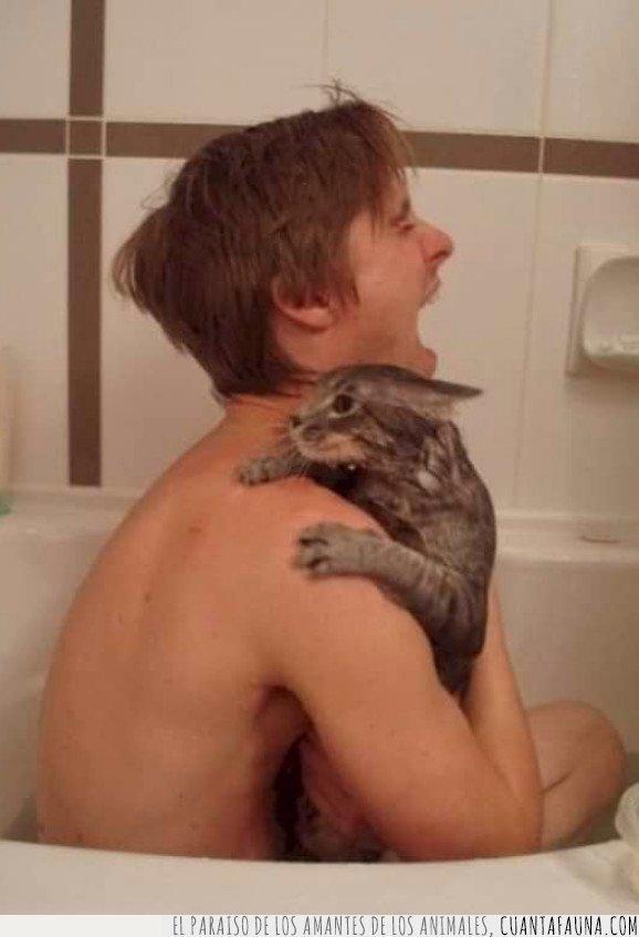 baño,gato,uñas