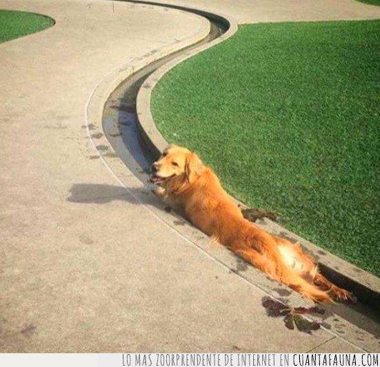 agua,canal,perro