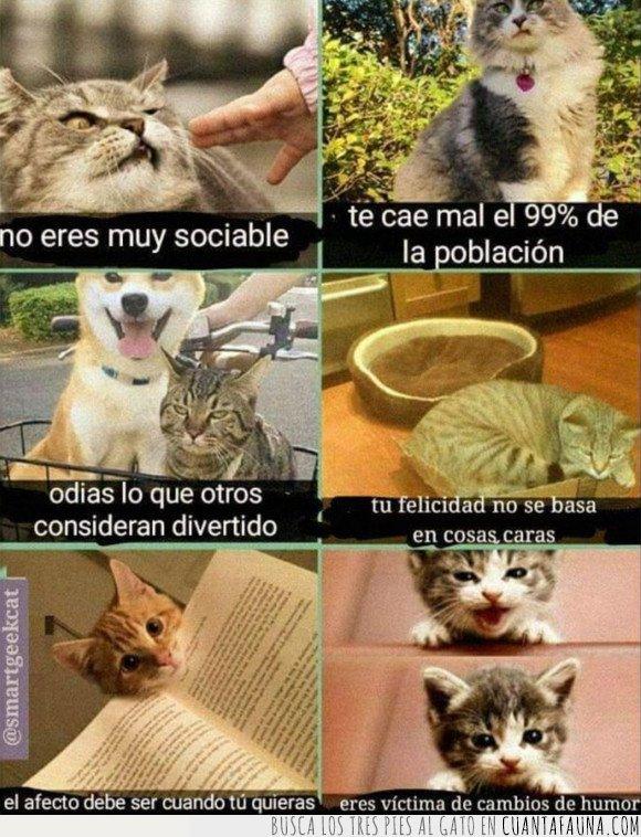 gatos,señales
