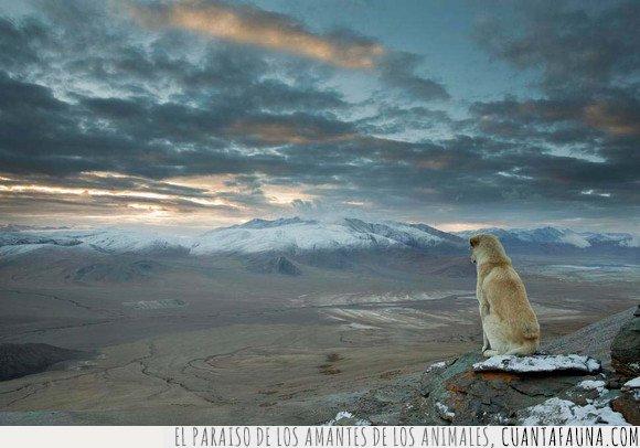 mear,paisaje,perro