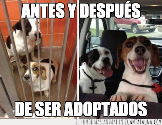 adopcion,perros