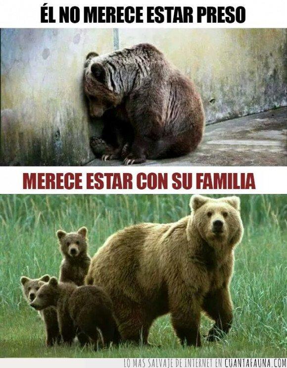 oso,preso,zoo