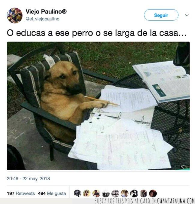 estudios,perro