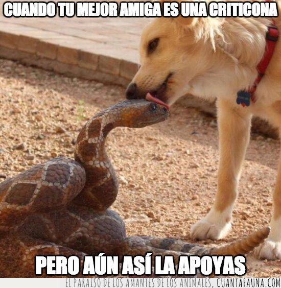 perro,serpiente