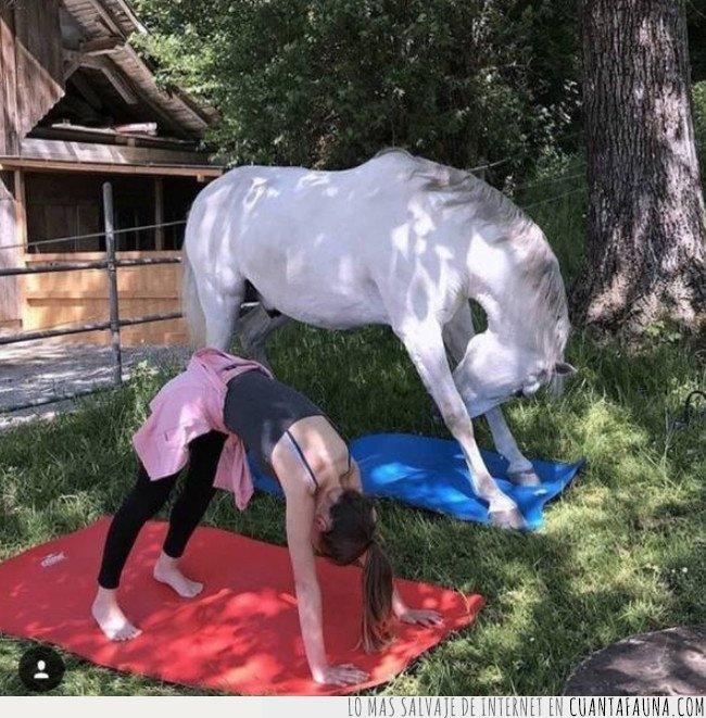caballo,yoga